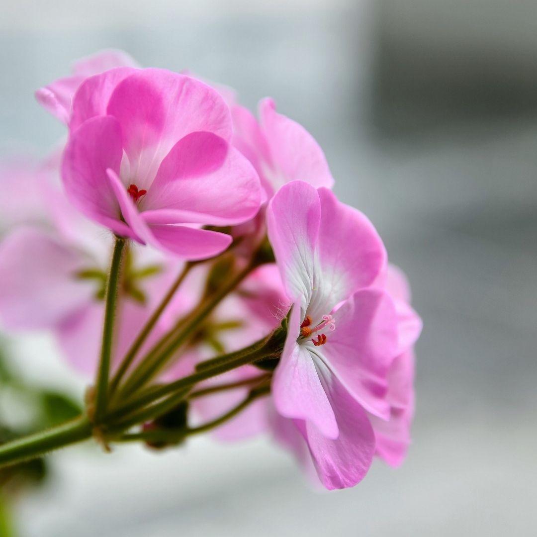 Cultive a sua terra interior com sementes que dão lindas flores e saborosos frutos. Com o tempo, vem a colheita saudável do que você plantou.